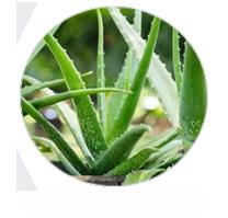 Aloe Vera Blog Logo
