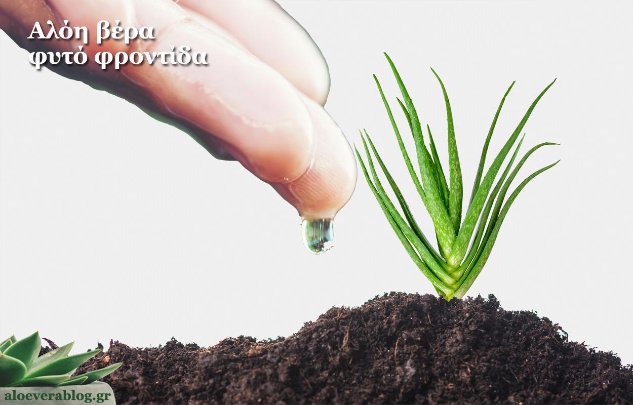 Αλόη βέρα φυτό φροντίδα