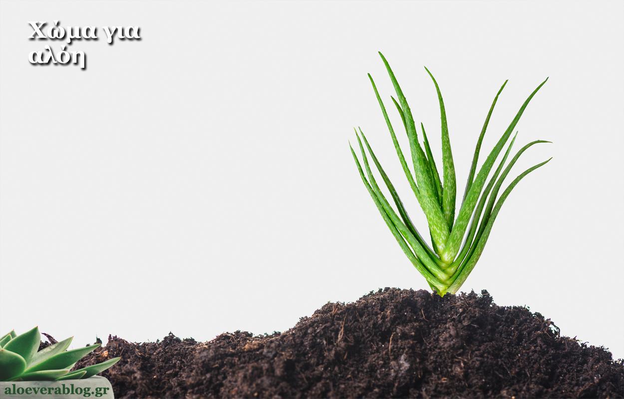 Χώμα για το φύτεμα της αλόης