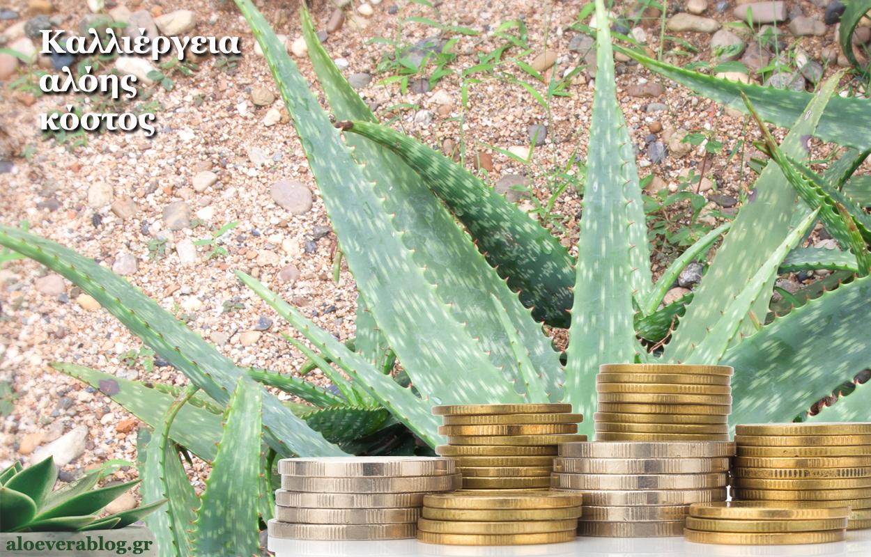 Καλλιέργεια αλόης κόστος